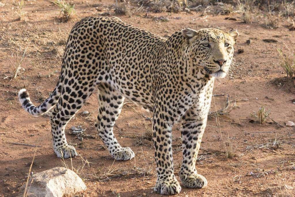 Sefapane Lodge and Safaris